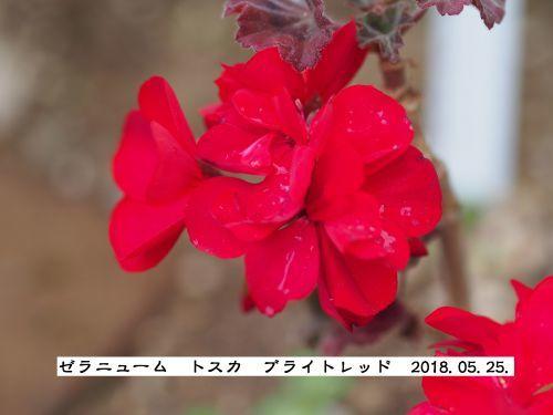 f0342982_23214260.jpg
