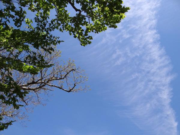 新緑の十和田湖ドライブ♪_a0136293_16101663.jpg
