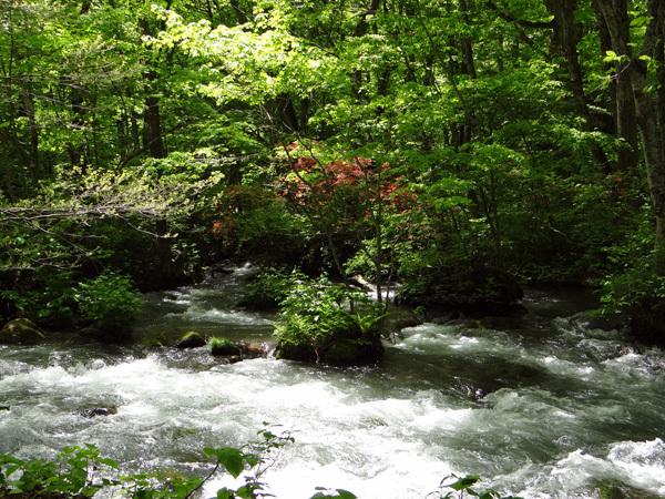 新緑の十和田湖ドライブ♪_a0136293_16163826.jpg