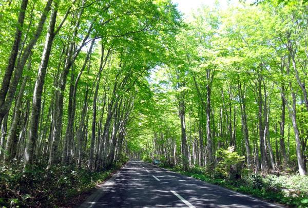 新緑の十和田湖ドライブ♪_a0136293_16221835.jpg