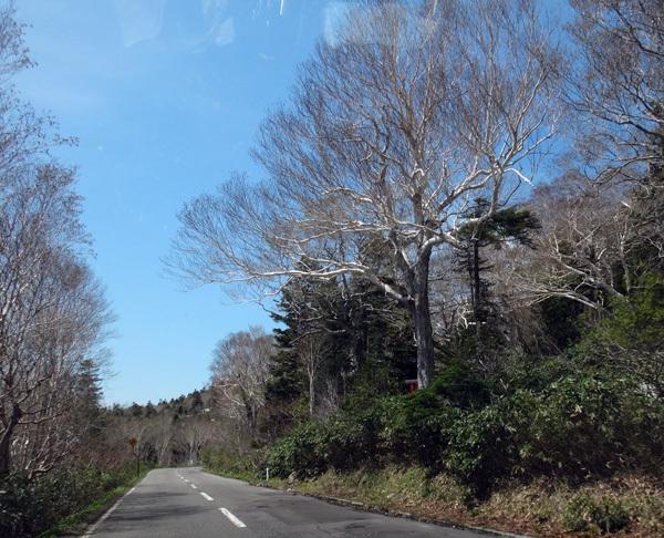 新緑の十和田湖ドライブ♪_a0136293_16231106.jpg