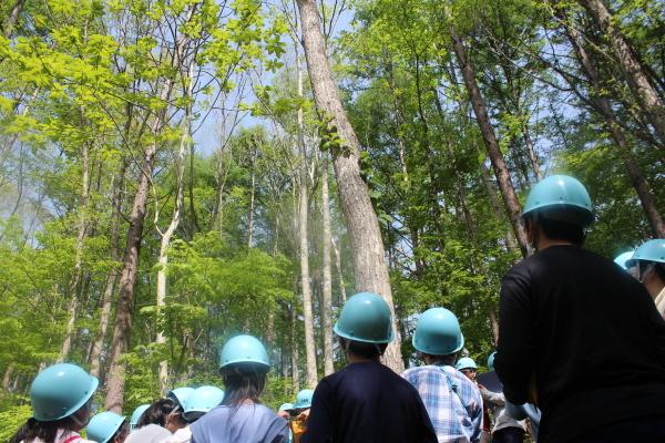 中学生の体験学習「Green School」を行いました。_f0227395_14460840.jpg