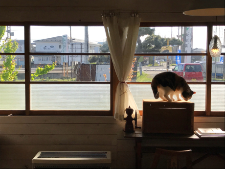 匙は猫カフェ?_e0148212_16395387.jpg