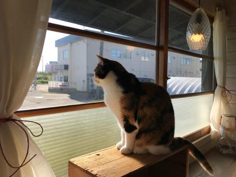匙は猫カフェ?_e0148212_16400215.jpg