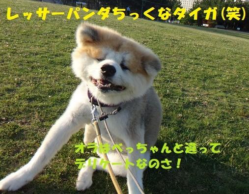 丸刈りペア(^^♪_f0121712_01191739.jpg