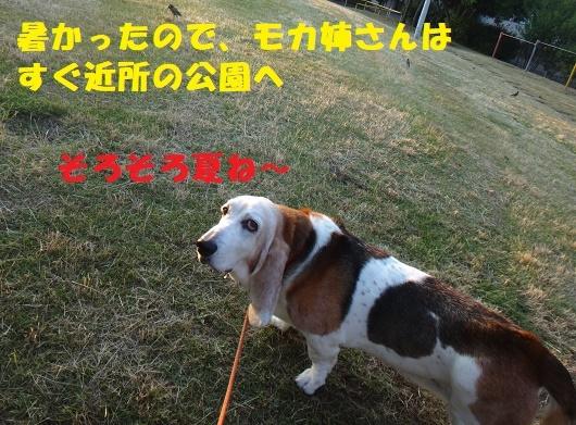 丸刈りペア(^^♪_f0121712_02035048.jpg