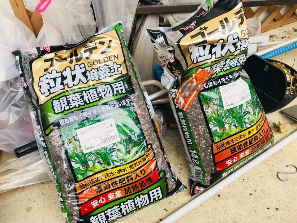 【観葉植物】リフレッシュ☆_b0219726_15271854.jpg