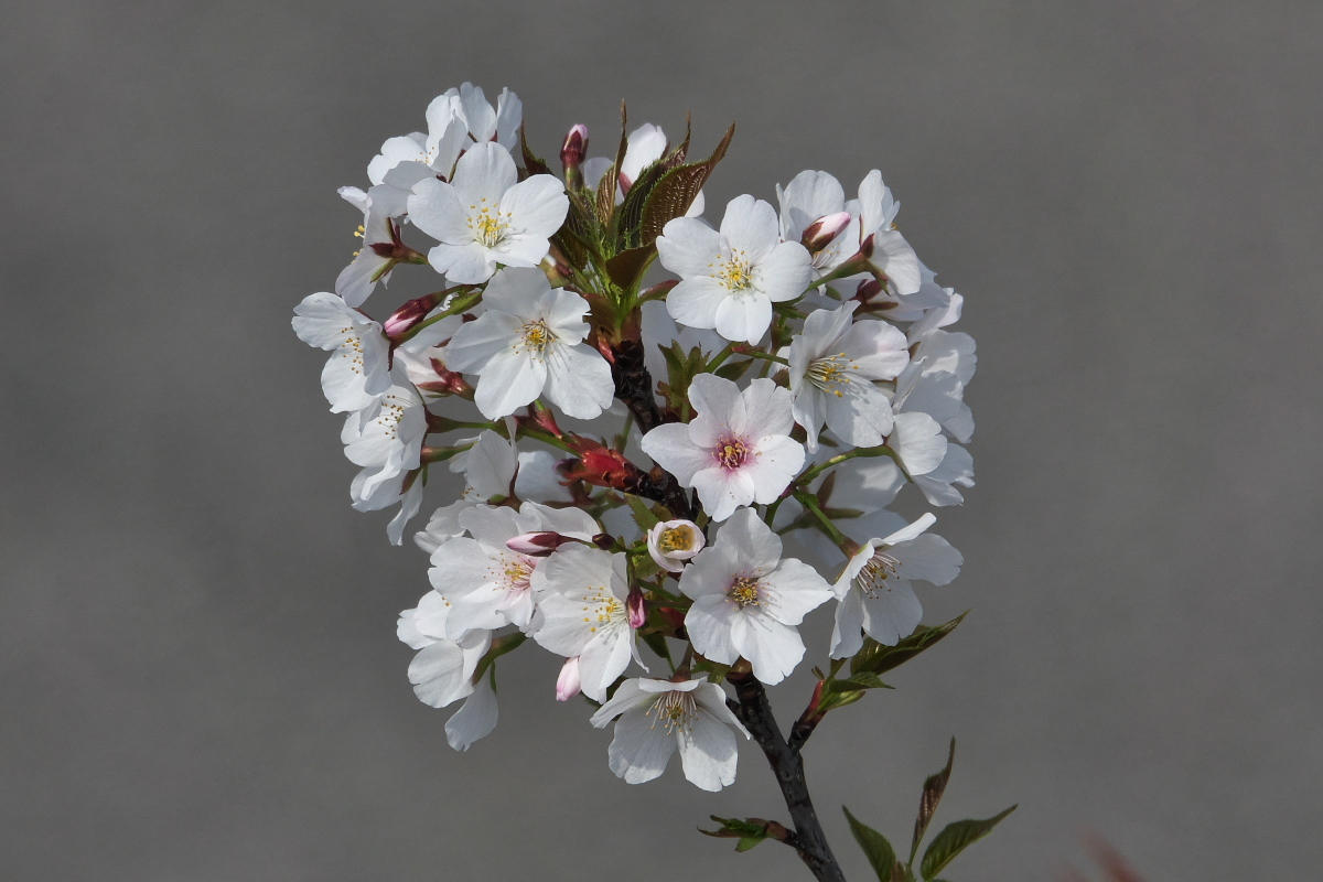 RX10M4で撮る「花と昆虫」_d0137627_23081900.jpg