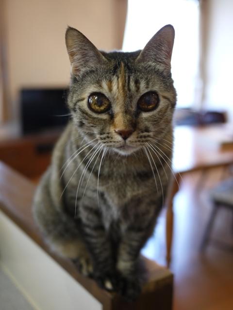 猫のお留守番 天ちゃん麦くん茶くん編。_a0143140_21215650.jpg