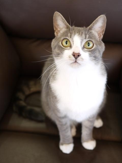 猫のお留守番 天ちゃん麦くん茶くん編。_a0143140_21220624.jpg