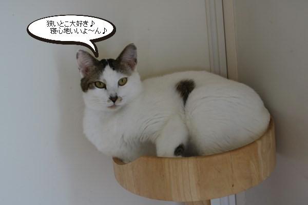 大きい保護猫さんは狭いこと大好き_e0151545_20472185.jpg