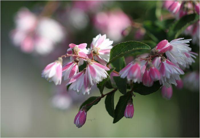 庭の花_a0256349_736303.jpg