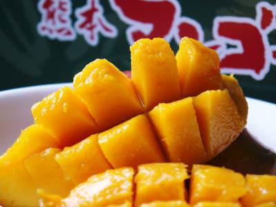 完熟アップルマンゴー 着果の様子と果実の枝吊り_a0254656_17141426.jpg