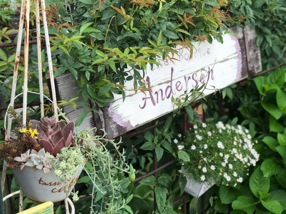 田んぼの中の花屋・・・アナーセンの一コマ・・_b0137969_06594410.jpg