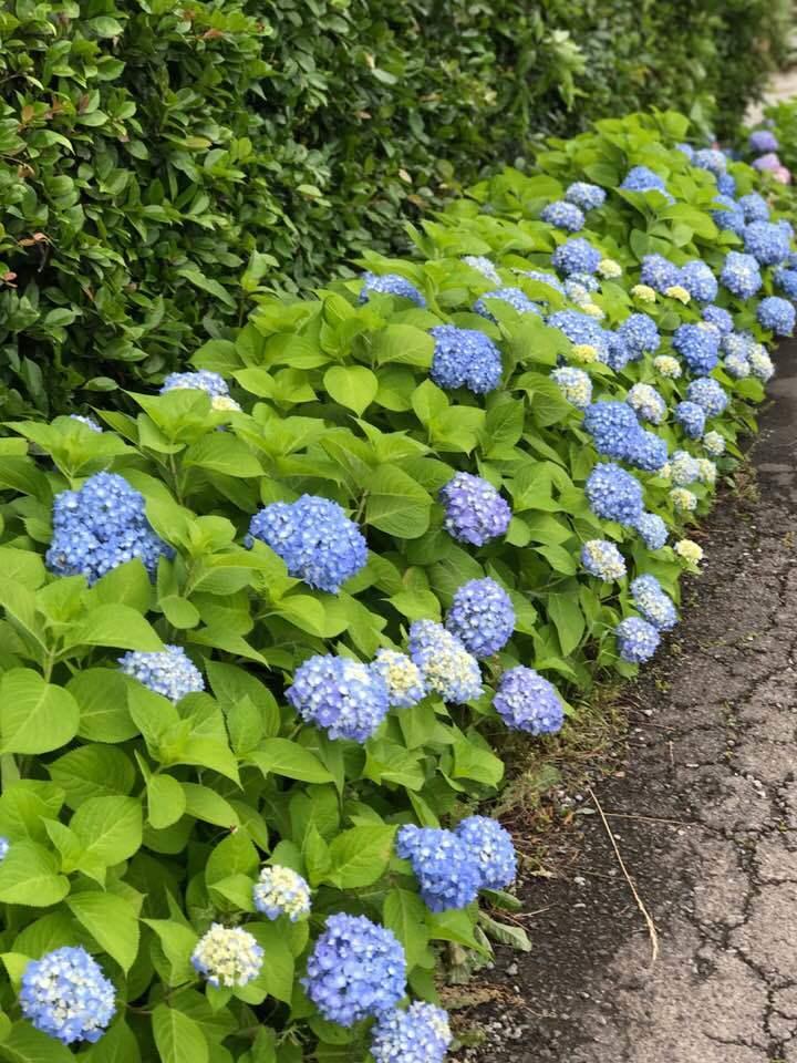 田んぼの中の花屋・・・アナーセンの一コマ・・_b0137969_07010910.jpg