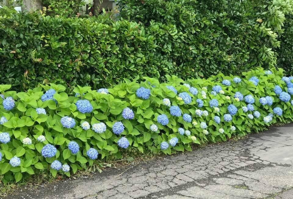 田んぼの中の花屋・・・アナーセンの一コマ・・_b0137969_07033551.jpg