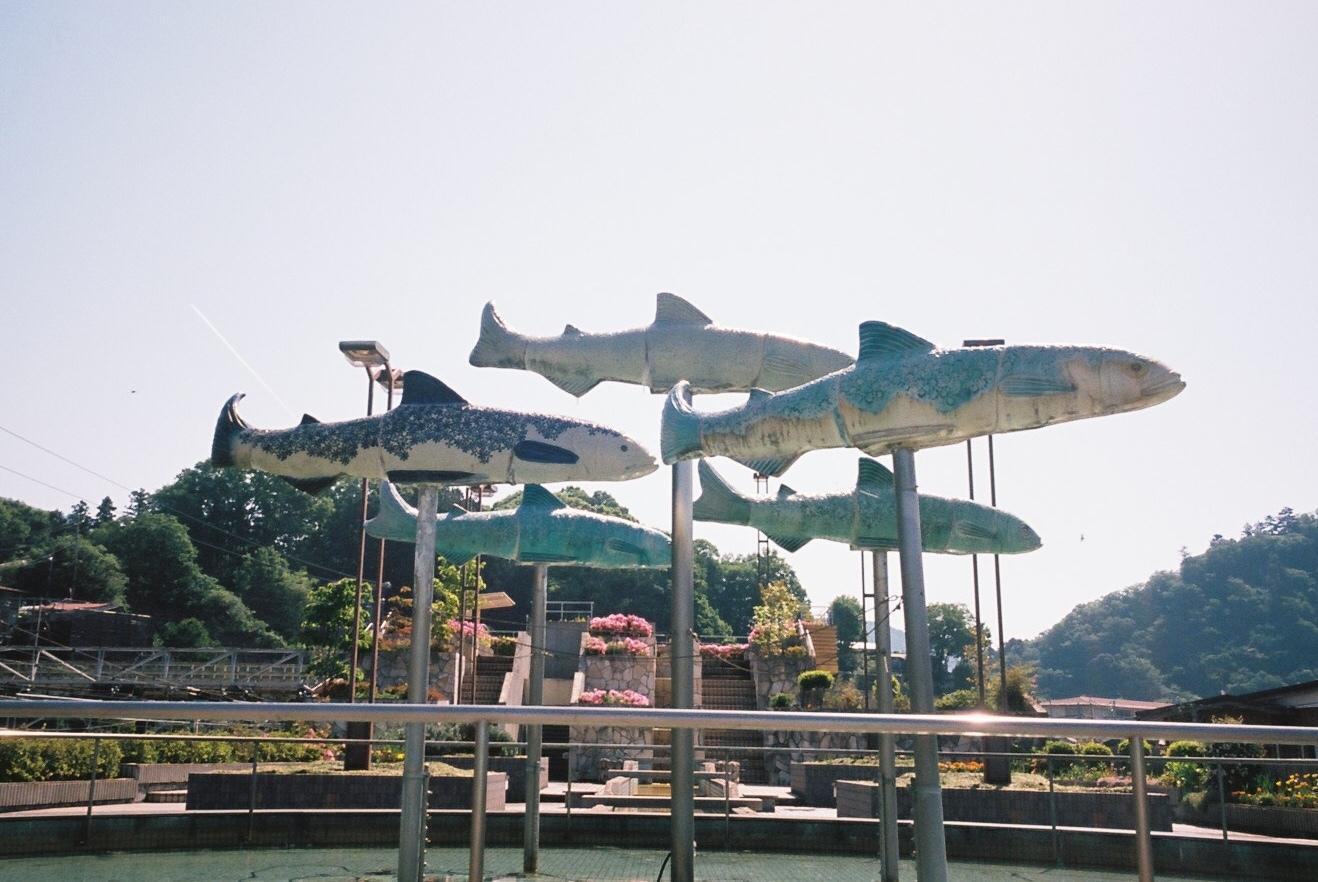魚夢_c0195272_18512681.jpeg