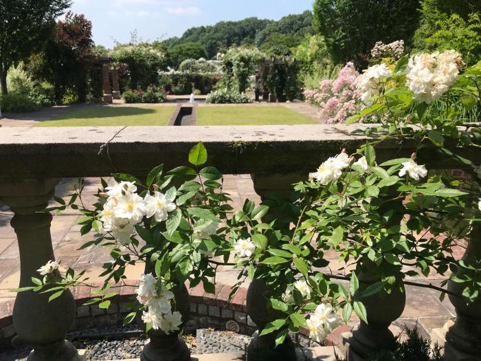花フェスタ記念公園2018_e0233674_08275549.jpg