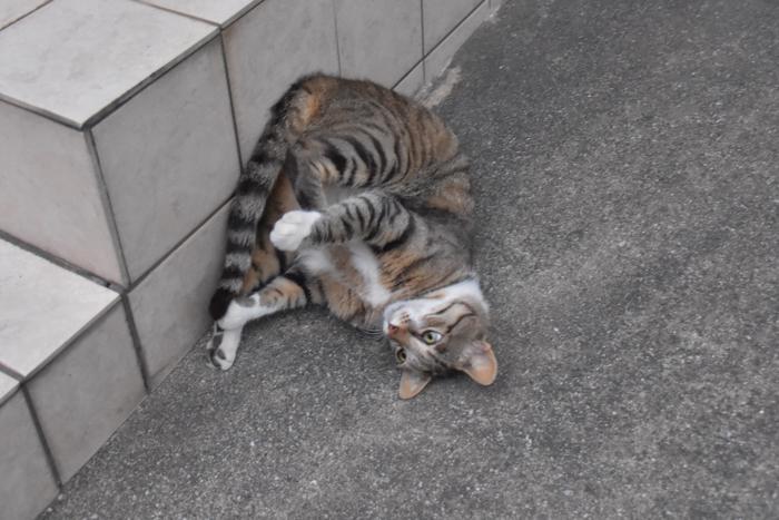 何がしたいのか、ジロちゃん♪ (^o^)_c0049299_22111921.jpg
