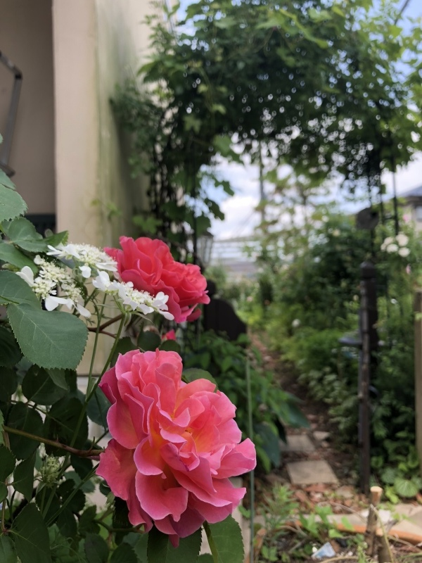 薔薇の季節2018_f0251010_21240549.jpeg