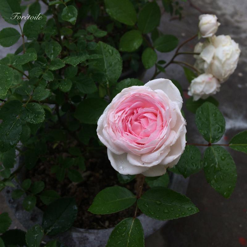 粉粧楼_f0377243_11555430.jpg