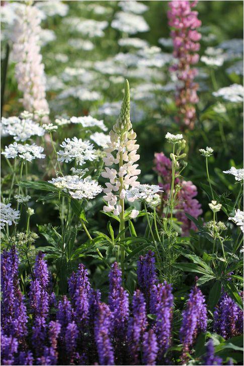 庭の花_a0256349_8551358.jpg