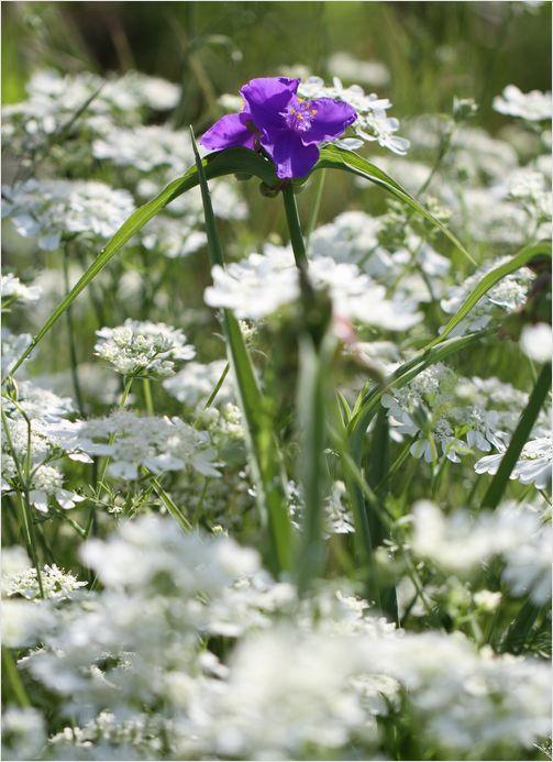 庭の花_a0256349_8552228.jpg