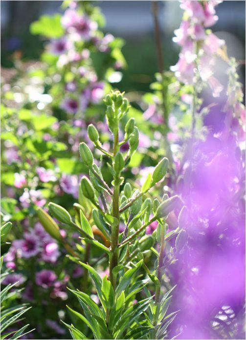 庭の花_a0256349_855460.jpg