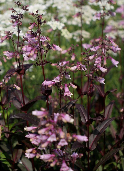 庭の花_a0256349_915922.jpg