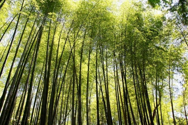 竹林の径_a0355356_18165218.jpg