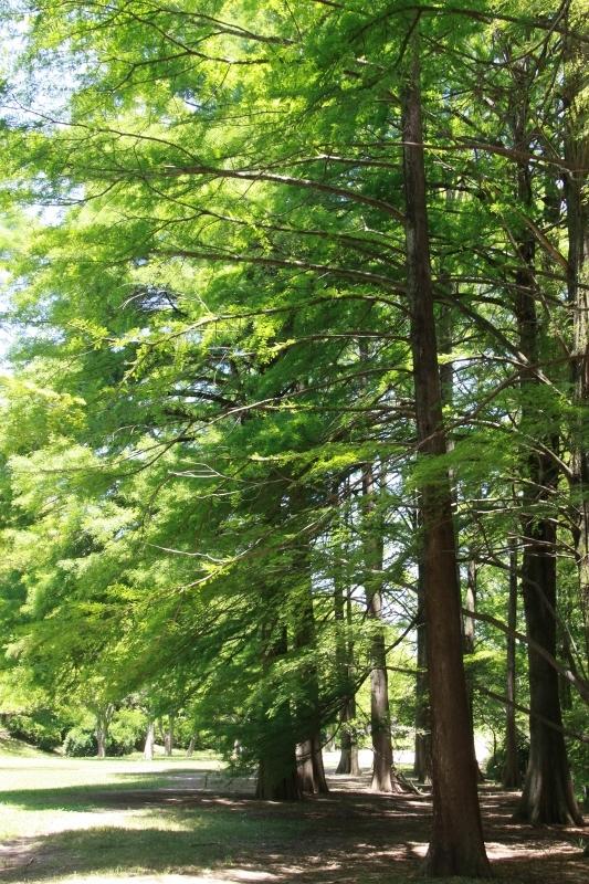 竹林の径_a0355356_18180373.jpg
