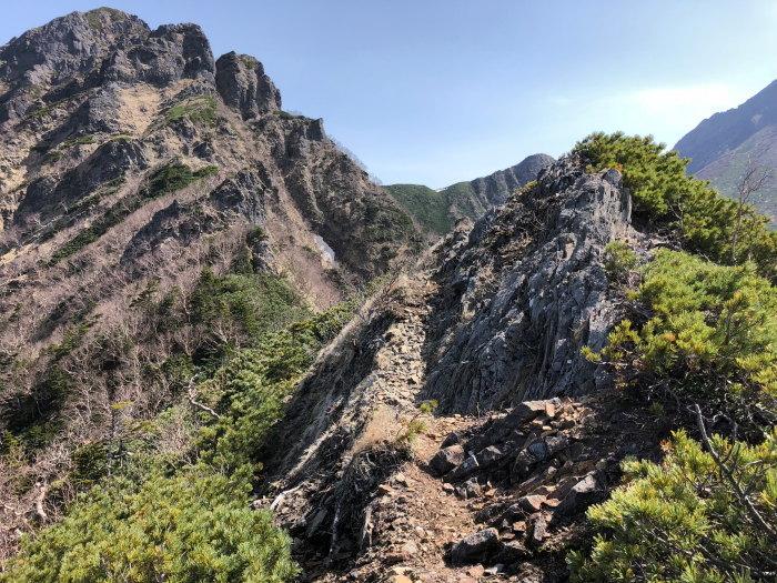 阿弥陀岳 南稜&中央稜 180527 シナノコザクラとホテイラン_e0338862_18133835.jpg