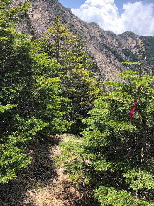 阿弥陀岳 南稜&中央稜 180527 シナノコザクラとホテイラン_e0338862_18514302.jpg