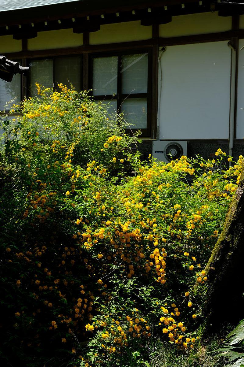 松尾大社_f0021869_21190749.jpg