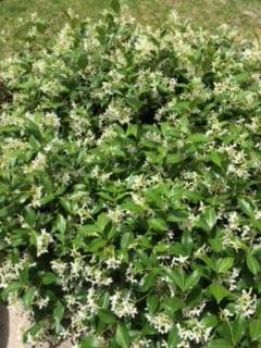 我が家の庭ー雑草との戦い_e0350971_14464404.jpg