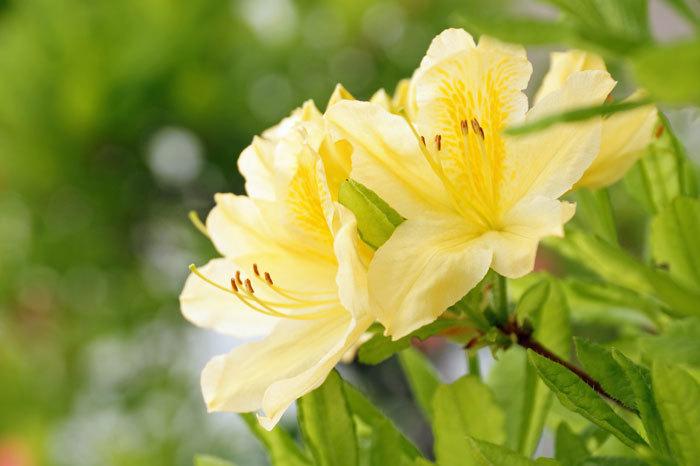 花咲く・・5月_d0162994_06554593.jpg