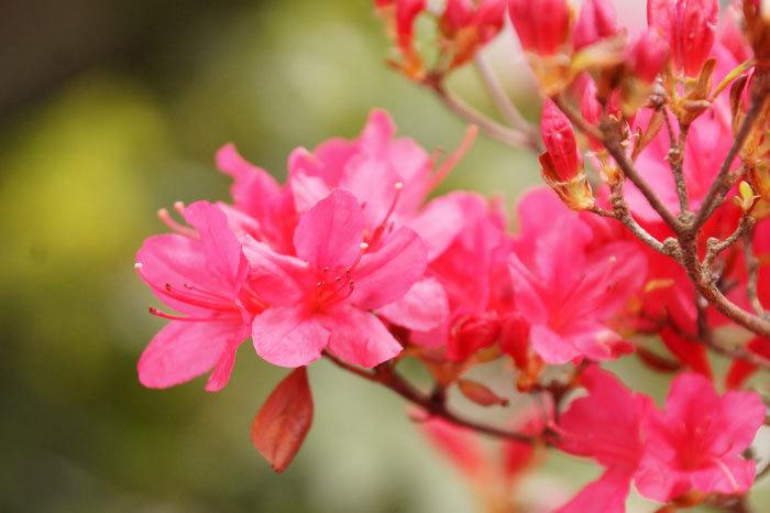 花咲く・・5月_d0162994_06561608.jpg