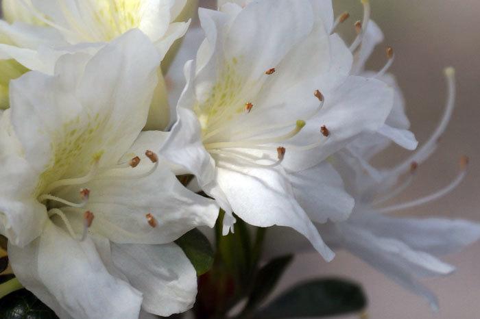花咲く・・5月_d0162994_06573482.jpg