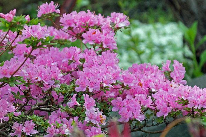 花咲く・・5月_d0162994_06575347.jpg