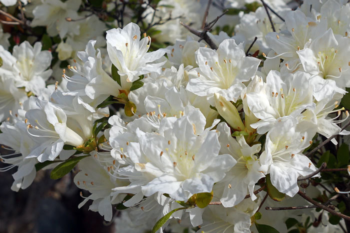花咲く・・5月_d0162994_06584152.jpg