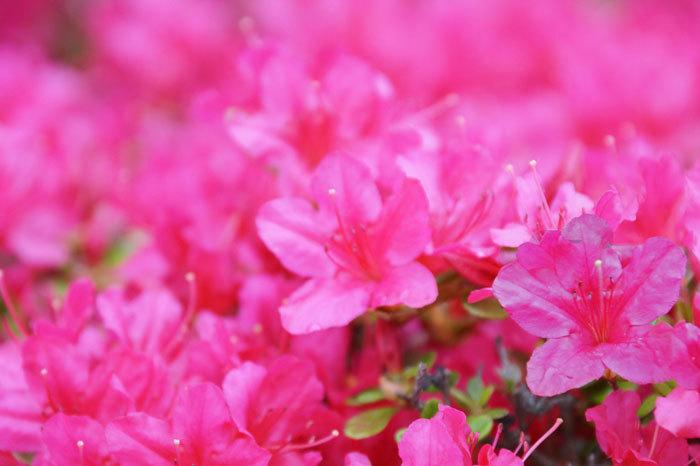 花咲く・・5月_d0162994_07000009.jpg