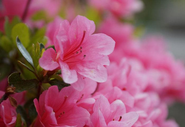 花咲く・・5月_d0162994_09031802.jpg
