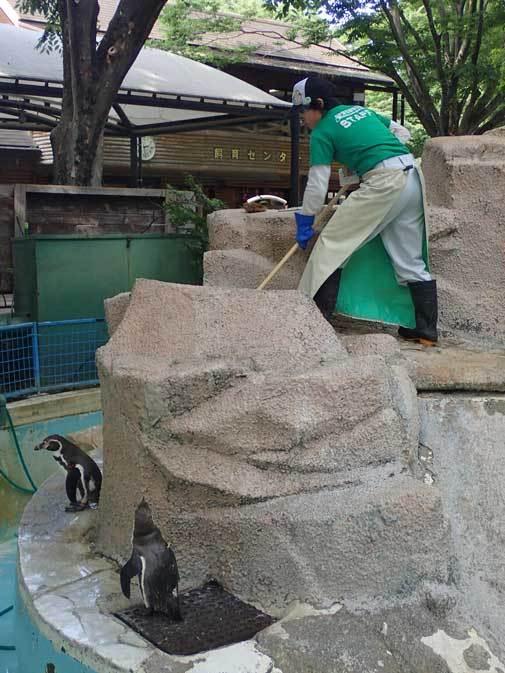 千葉市動物公園~子ども動物園の動物たち:カピバラ「モーブ」、テンジクネズミの橋渡り_b0355317_21422998.jpg