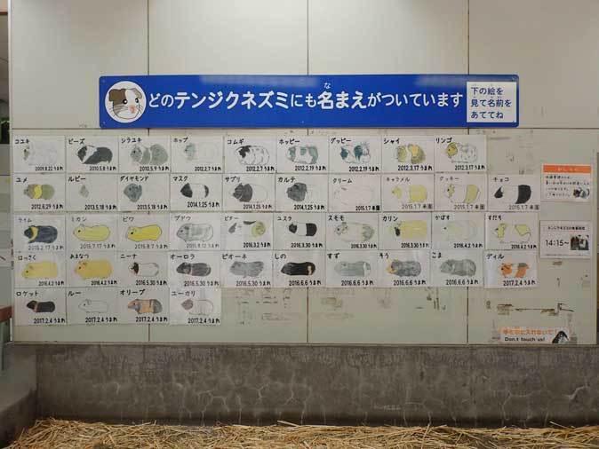 千葉市動物公園~子ども動物園の動物たち:カピバラ「モーブ」、テンジクネズミの橋渡り_b0355317_21453229.jpg