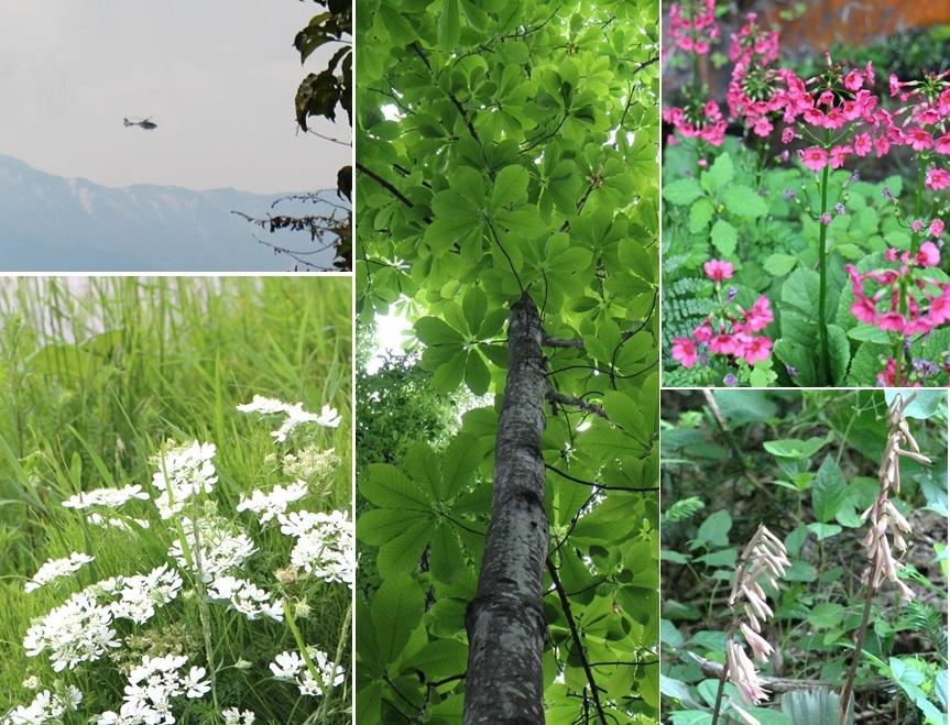 宮の森自然園へ_a0212730_21401513.jpg
