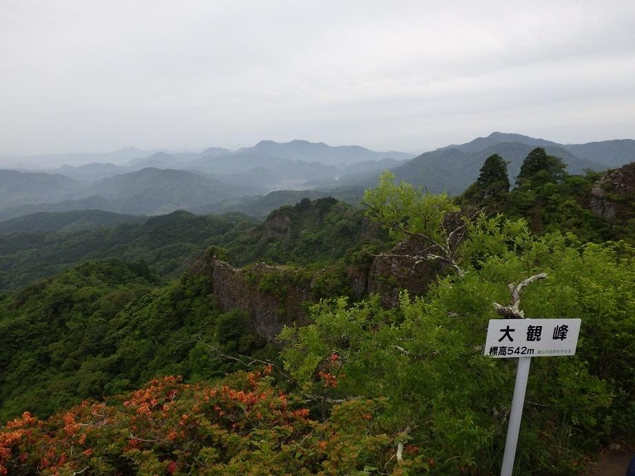 田原山へ・・・イワギリソウ・マメヅタラン_e0164643_10535559.jpg