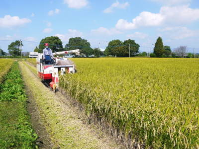 七城米 長尾農園 数量限定で販売中!平成30年度の米作りもスタート!苗床作りを現地取材!_a0254656_17030978.jpg