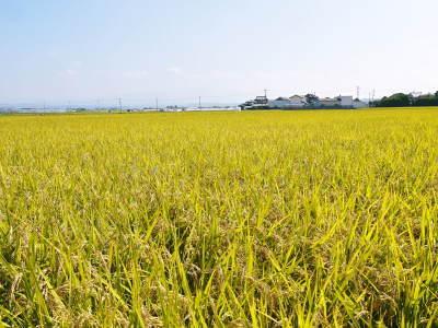 七城米 長尾農園 数量限定で販売中!平成30年度の米作りもスタート!苗床作りを現地取材!_a0254656_17055214.jpg