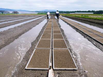 七城米 長尾農園 数量限定で販売中!平成30年度の米作りもスタート!苗床作りを現地取材!_a0254656_17092468.jpg