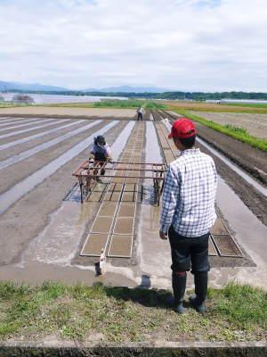 七城米 長尾農園 数量限定で販売中!平成30年度の米作りもスタート!苗床作りを現地取材!_a0254656_17101885.jpg